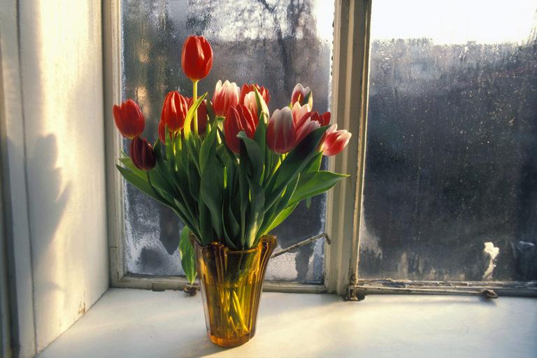 Croatian windows, analog photography, flowers on the window
