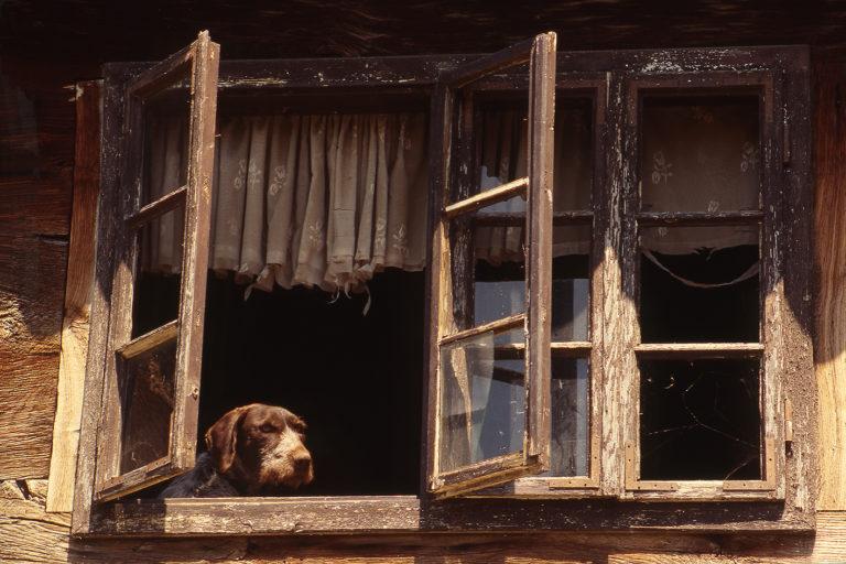 Croatian windows, analog photography, dog on the window